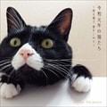 令和元年の猫たち〜秋元順子 愛をこめて〜