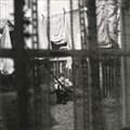 ケイオス・アンド・クリエイション・イン・ザ・バックヤード〜裏庭の混沌と創造 [SHM-CD]