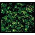 「ココロに花を」deluxe edition (2枚組 ディスク2)