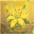 【CDシングル】Lily