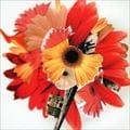 ハナハサク/花は咲くプロジェクト