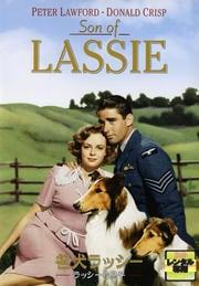 名犬ラッシー ラッシーの息子