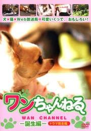 ワンちゃんねる -誕生編- ドラマ完全版