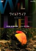 ワイルドライフ 幻の鳥 炎の舞に迫る ニューギニア島
