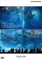 An Aquarium -水族館- 沖縄美ら海水族館