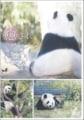 癒されパンダ 〜リーリーとシンシン〜